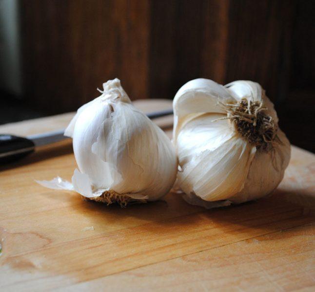 Garlic_CC_20111129_2_1